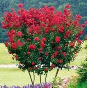 别墅美化,只需一株爬藤植物,让你的庭院风景美如画