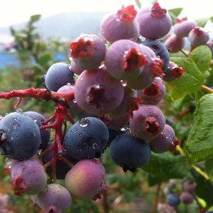 南北家庭都能种的十大水果,当年结果,种植阳台刚刚好