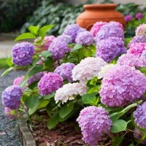 """9种最适合秋冬养的""""懒人植物"""",耐寒好爆盆,开花后香气满满"""