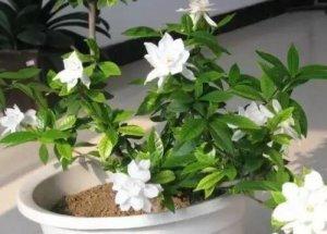 养花不懂换盆土,你永远等不到植物开花!难怪你的花死翘翘了