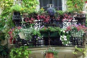 比香水还要香的5种花,养在阳台上,客人直夸满屋子都飘香