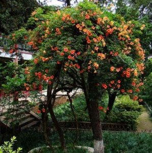 适合用来遮阴的八种爬藤植物花卉,你最喜欢种什么