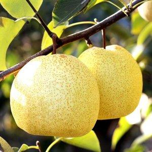 秋冬干燥需补水,气色好的女人都爱吃这这些水果,皮肤越吃越润