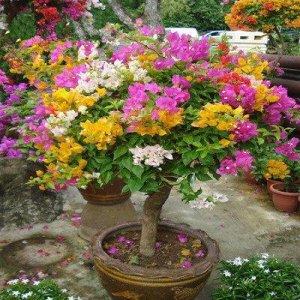 把这些花卉种在庭院阳台上,让阳台变身为温馨的小花房