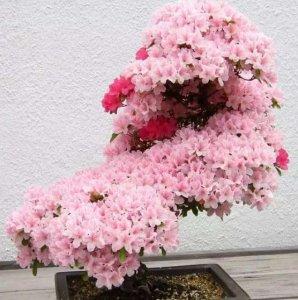 8款开花爆盘的花卉,春天开出一片花海,阳台变花园不是梦