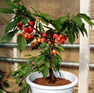这7种水果阳台盆栽最简单,易存活结得多,一年四季不断档