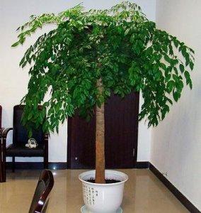 偷偷告诉你,这几款植物放客厅,好看又旺财,最后一款特显身份