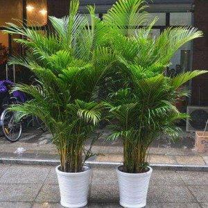 悄悄告诉你,这几款植物放客厅,好看又旺财,第五款特显身份