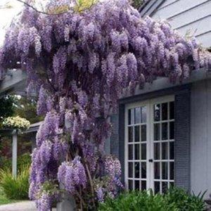 几块钱的爬藤植物,让阳台秒变花园,大伙都跑来围观
