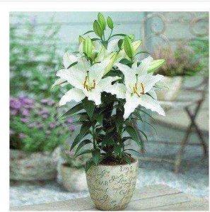比香水还要香的7种花,精明的女人都知道养在阳台上,满屋子飘香
