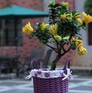 7种可以种在阳台上的盆栽水果,不用几个月就能采摘了