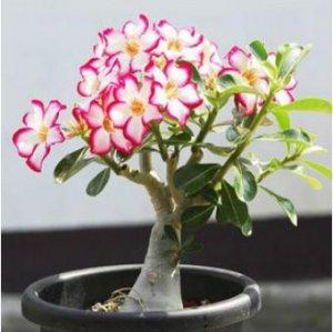 这几种懒人也能种活的花卉植物,开花能力却着实惊人