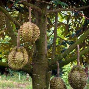 8种可以种在阳台的水果,好看又好吃