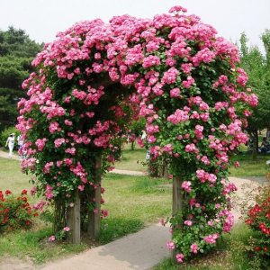 比香水还要香的6种花,养在阳台上,满屋子都飘香