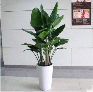 偷偷的告诉你,这几款植物放在客厅,不仅好看,重点是还旺财