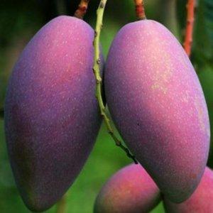 现在阳台都流行种水果盆栽,下面这几款水果更是随便爆盆