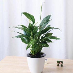 很少人知道,家里放上这些植物,家里人的身体越来越健康