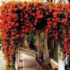 比紫檀还名贵的几种花卉植物