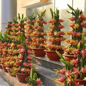 老婆在阳台盆栽了这么多水果,长这么好,水果一年到头都吃不完