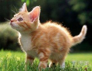 为什么说养猫穷三代 猫到底是招财还是来灾