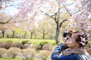 日本樱花之旅的准备攻略、购物清单大公开