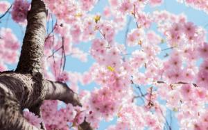 """浪漫的日本樱花之旅,邂逅满满力量的""""小贴贴"""""""