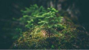 """奢思雅""""原生植萃"""",让肌肤享受来自原生植物的护肤力量"""