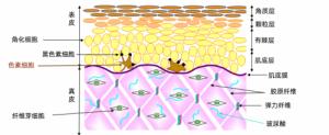 LaBee面膜告诉你 什么叫大麻CBD护肤的新标杆